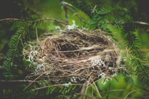 Learning To Thrive In An Empty Nest