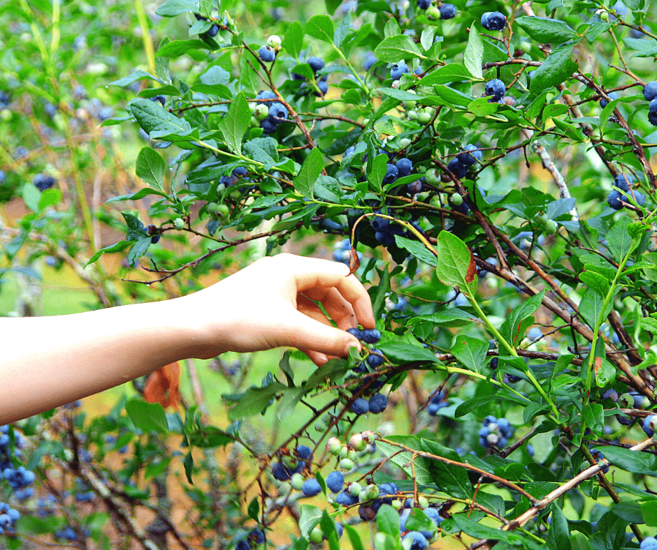 Foraging: A walk on the wild side